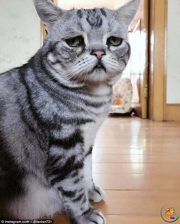 Gương mặt buồn không thể tả của Lulu