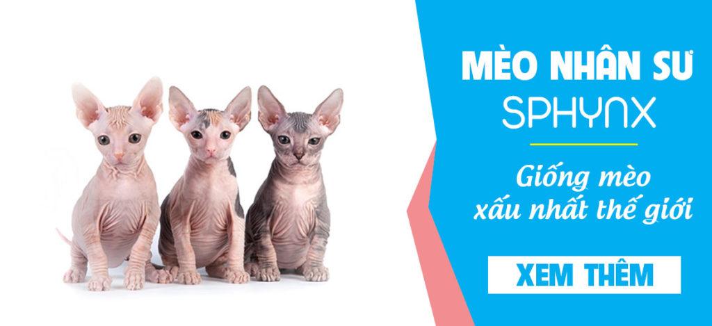 Sphynx là giống mèo không lông xấu nhất thế giới