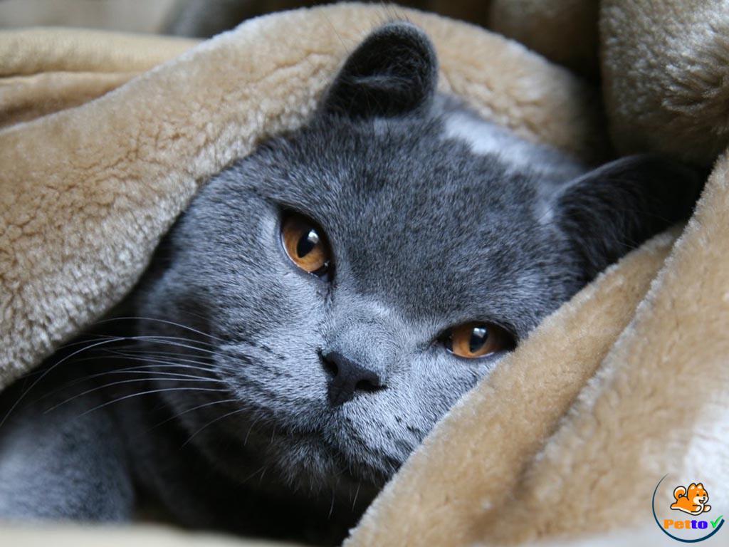 Mèo Nga cực kì dễ thương
