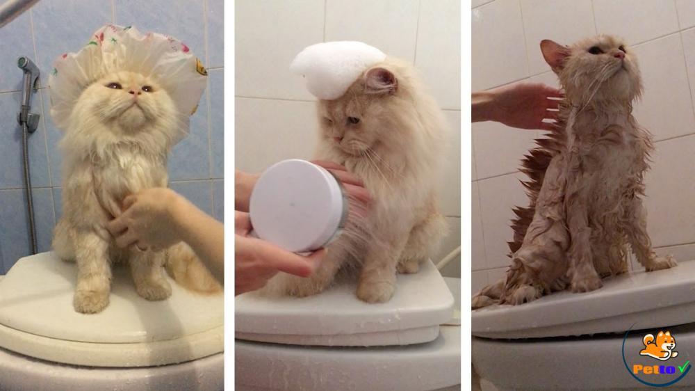 Tạo không khí tắm cho mèo thật thoải mái