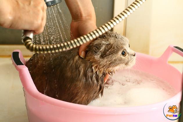 Nhiệt độ nước thích hợp để tắm cho mèo con là khoảng 37 – 39 độ C