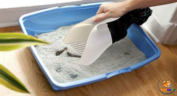 Dọn phân mèo bằng dụng cụ dành riêng cho mèo - cách dạy mèo đi vệ sinh vào cát
