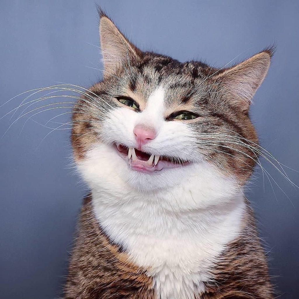 Mèo 50 sắc thái Rexie giống yêu râu xanh