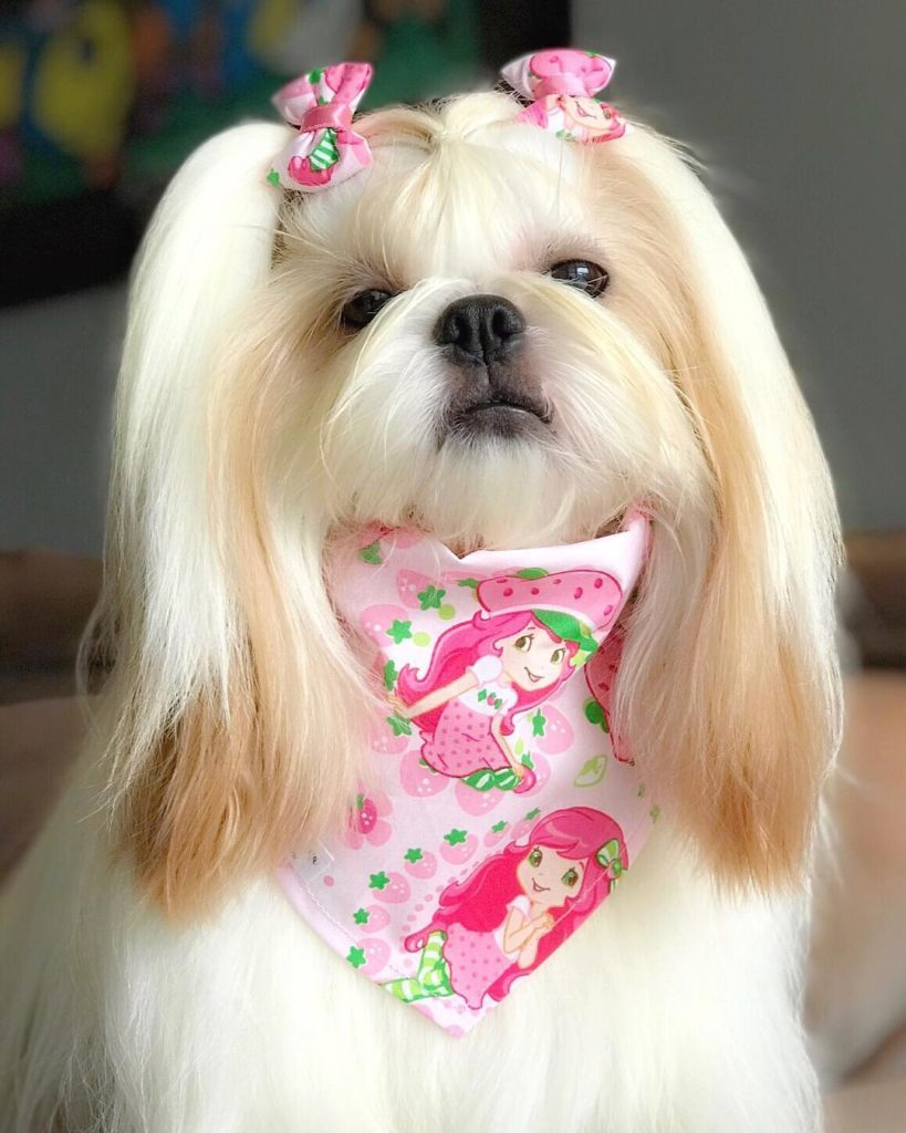 Chó tiểu thư