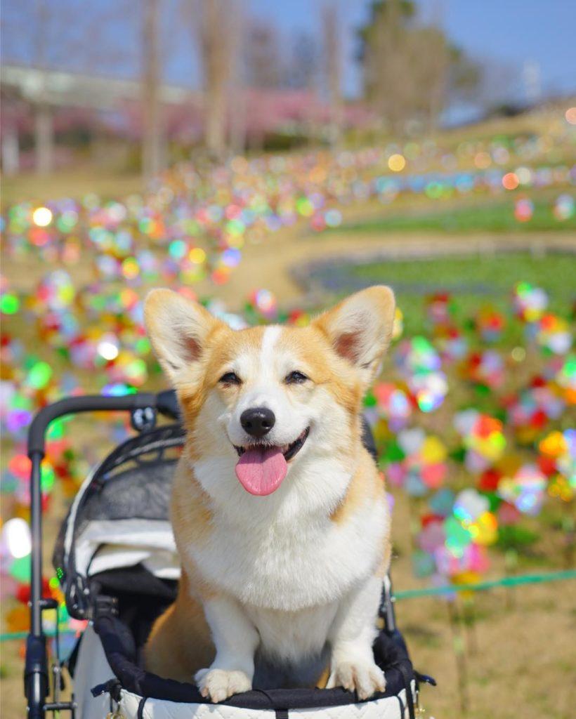 Bộ sưu tập hình ảnh những chú chó dễ thương của Petto hy vọng sẽ khiến bạn hài lòng
