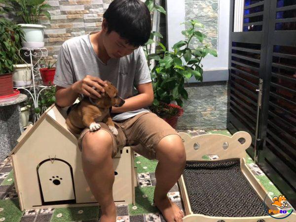 Nhà cho chó bằng gỗ chịu lực khó, bung vỡ