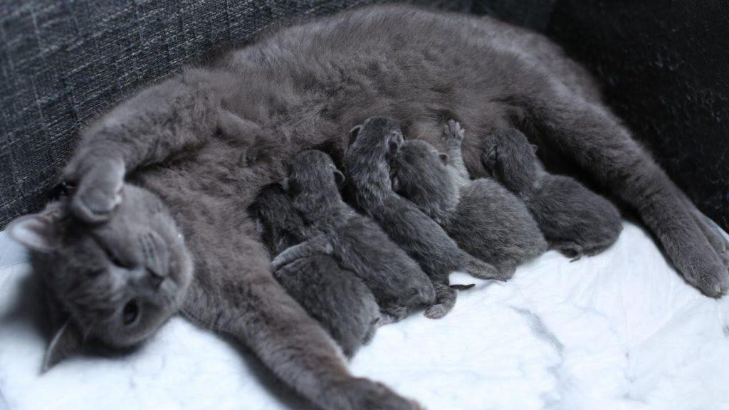 Các chú mèo aln mới sinh vài tuần tuổi