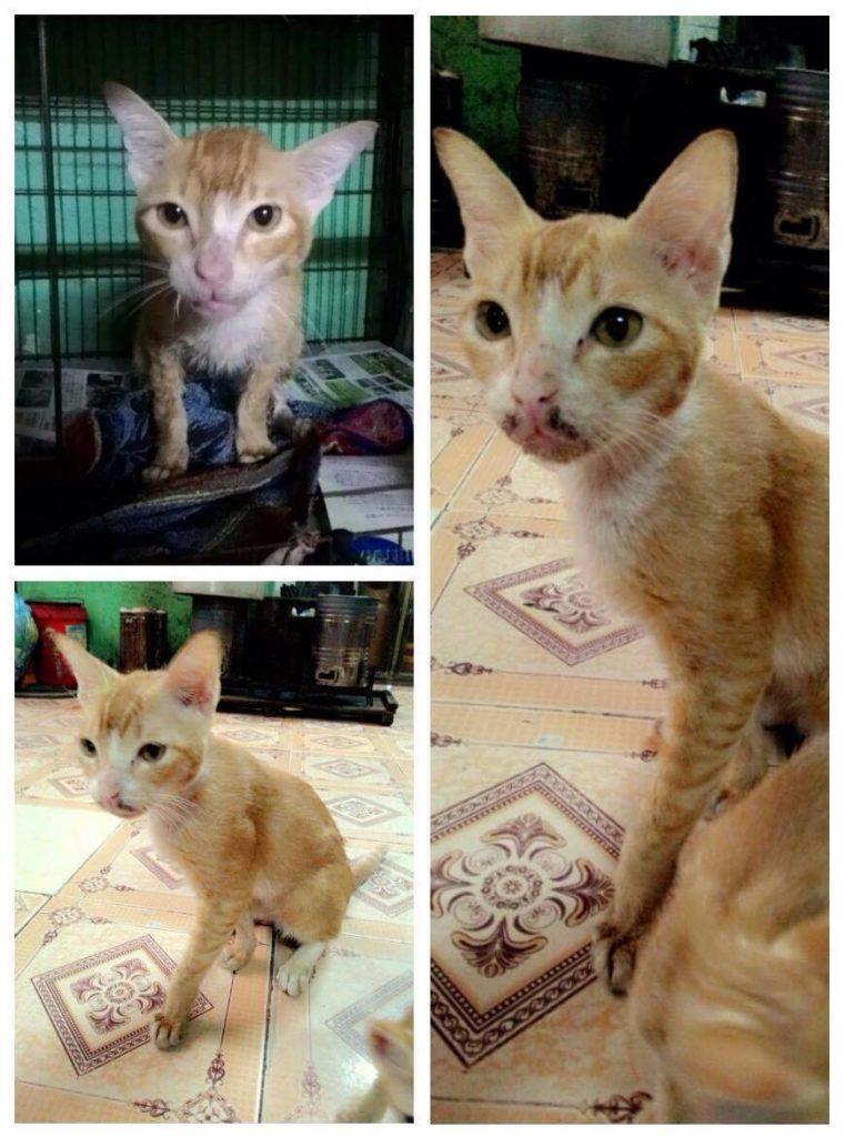 Chú mèo bị động kinh vì bị đánh tàn bạo
