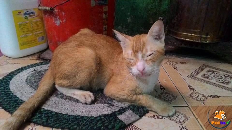 Chú mèo bị đánh đến động kinh