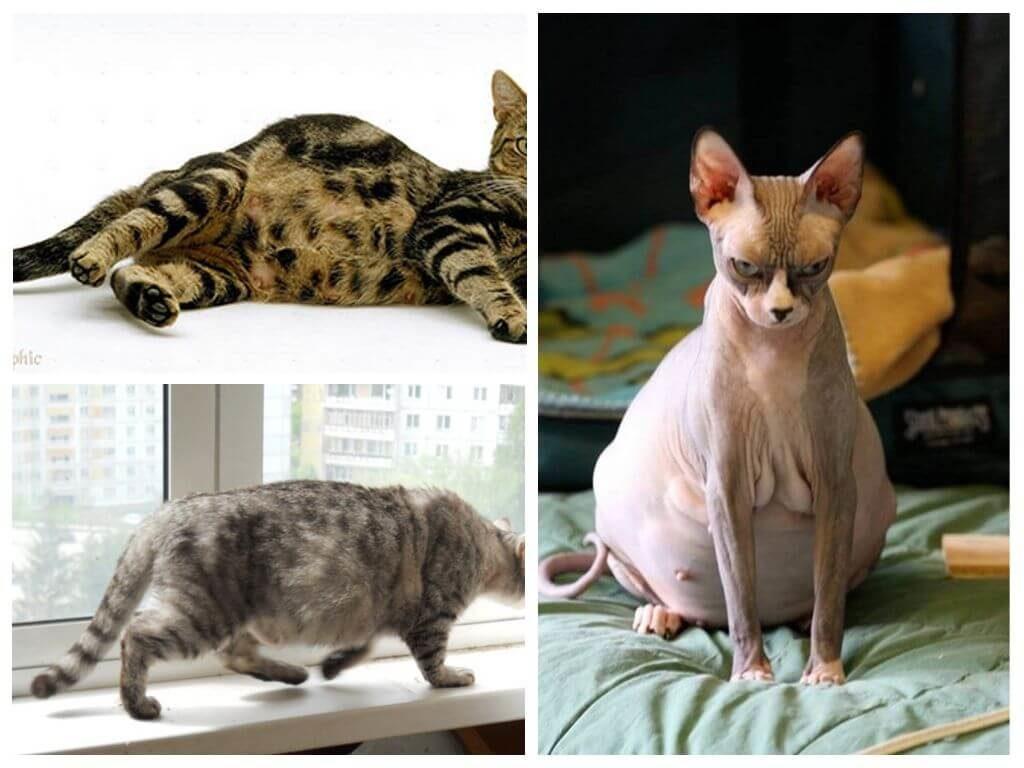 Dấu hiệu mèo mang thai biểu hiện cáu giận, mang tâm trạng bất ổn
