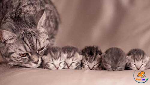 Những chú mèo mới sinh trông rất dễ thương
