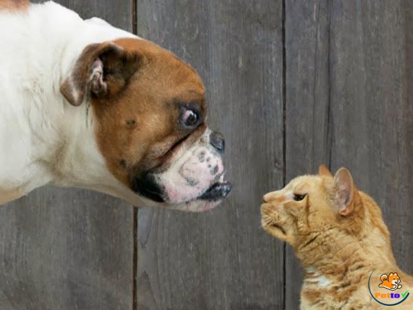 """Chó mèo luôn có mối """"hiềm khích"""" ngay từ ánh nhìn đâu tiên"""