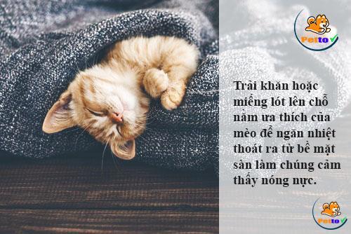 trải khăn cho mèo nằm tránh nhiệt từ sàn nhà