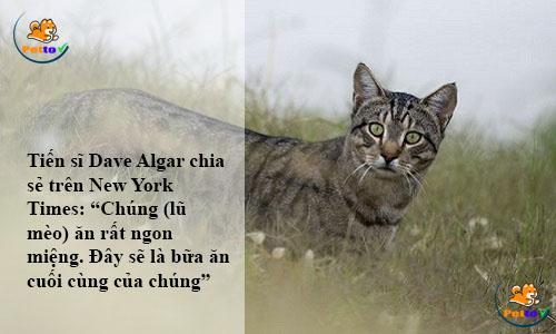 Phát biểu về loại xúc xích dành cho mèo hoang tại Úc