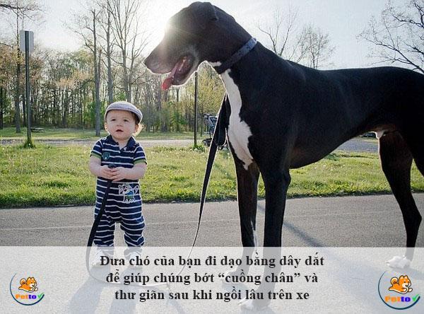 """Đưa chó của bạn đi dạo bằng dây dắt để giúp chúng bớt """"cuồng chân"""" và thư giãn sau khi ngồi lâu trên xe"""