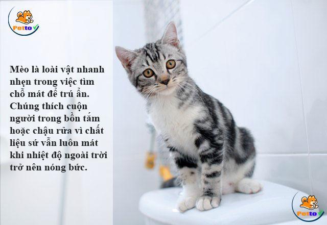 Mèo thích nằm ở nơi có chất liệu sứ