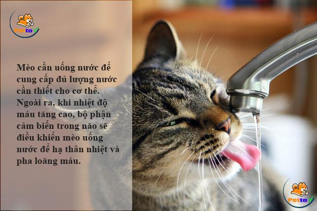 Cung cấp nước sạch cho mèo