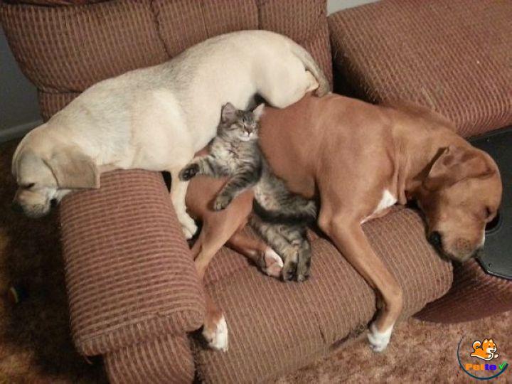 Hãy tạo cho một mèo không gian tránh xa loài chó để làm chỗ an toàn