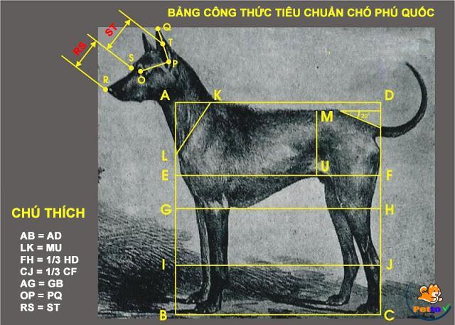 Tiêu chuẩn của Danh khuyển Việt Nam