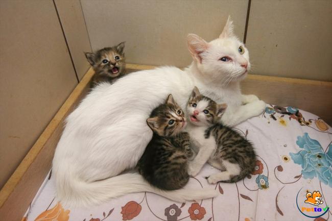 Mèo mẹ đã sinh con thành công