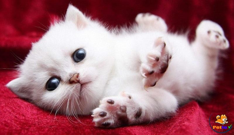 Chú mèo con dể thương đã chào đời