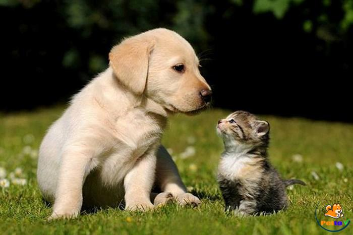 Làm quen mùi của nhau để chó mèo hòa thuận hơn
