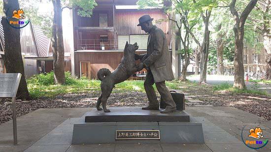 Hachiko - tượng đài về sự trung thành của loài chó