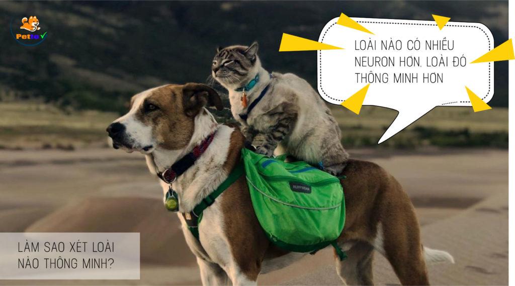 Giữa 2 con người, chúng ta còn khó lòng so sánh được vì mỗi người có thế mạnh riêng, huống hồ là giữa chó với mèo. Thế nên, khoa học lựa chọn cách đo lường trí thông minh bằng số lượng neuron thần kinh có trong não bộ.