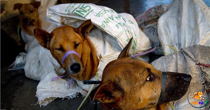 Việt Nam là một trong những nước ăn thịt chó nhiều nhất thế giới với 5 triệu con chó bị làm thịt và tiêu thụ mỗi năm