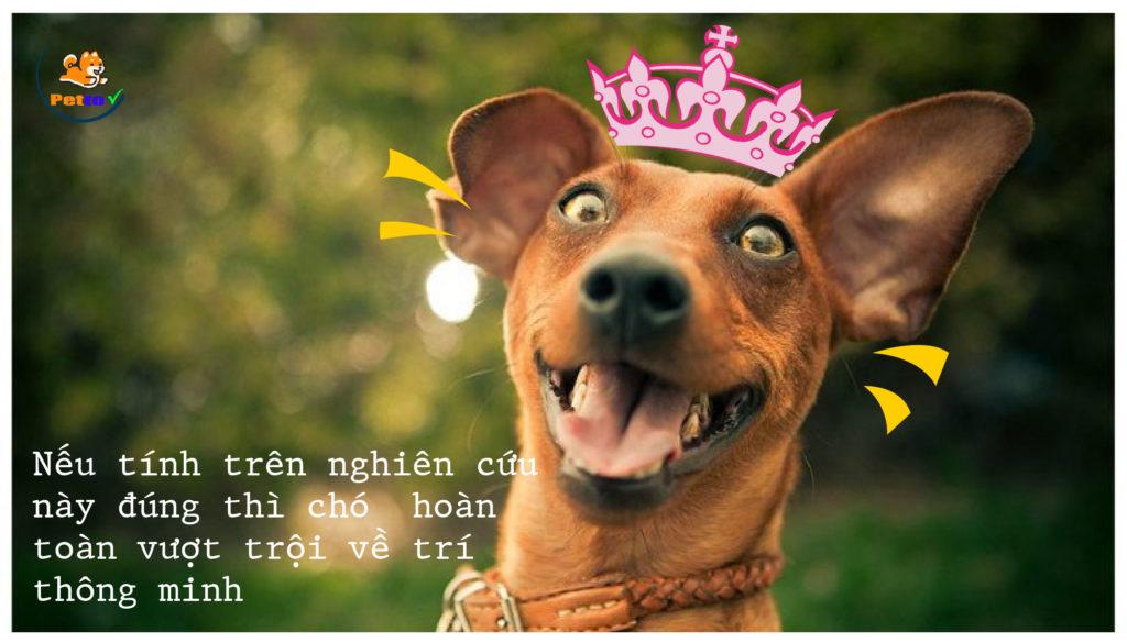 Chó là loài thông minh nhất ?!