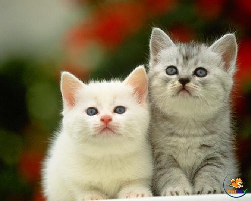 Huấn luyện cho mèo có một thói quen sinh hoạt tốt ngay từ khi còn nhỏ.