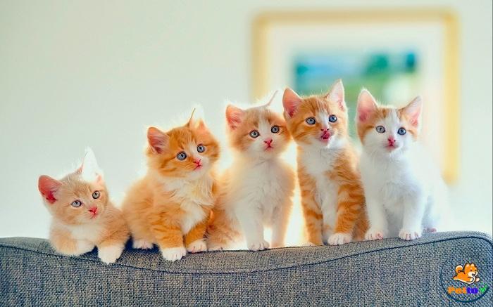 Cách Chăm Sóc Mèo Con 1 đến 2 tháng tuổi