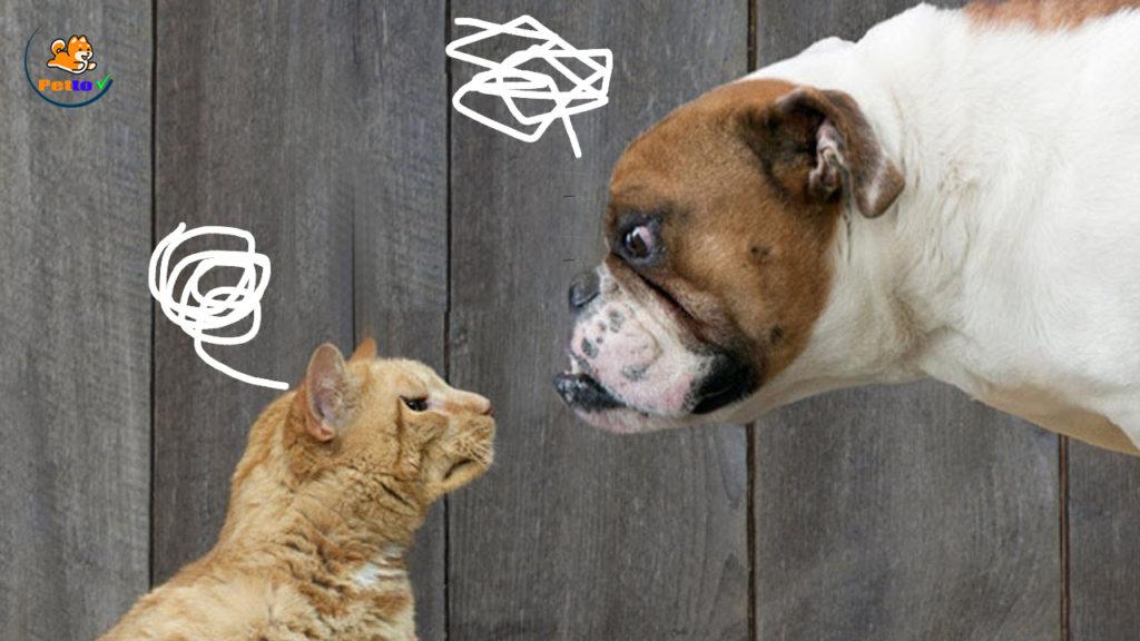 """Thêm một lý do để chó mèo """"ghét"""" nhau hơn"""
