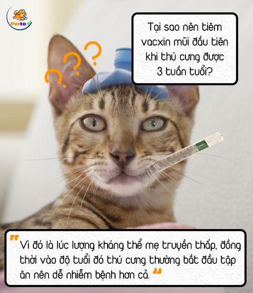 Bạn nên chú ý đến mũi tiêm vacxin đầu tiên khi thú cưng dược 3 tuần tuổi