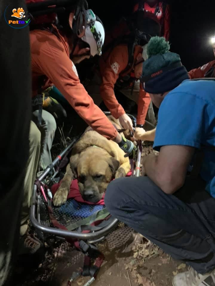 Chú chó ngoan ngoãn khi gặp được đội cứu hộ