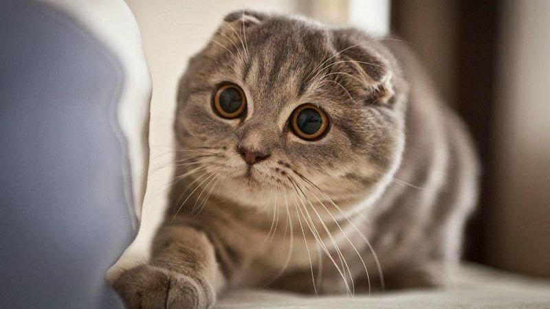 Tắm cho mèo nhiều lần cũng khiến mèo bị nấm
