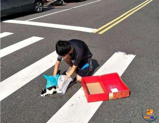 Trong bức ảnh, ai cũng dễ dàng nhận thấy, cậu bé nhẹ nhàng đặt xác mèo đốm vào trong hộp