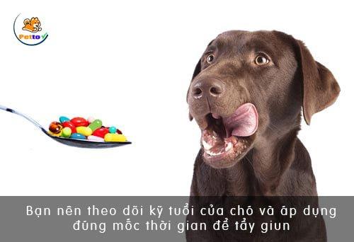 Hãy lập một sổ nhật ký cho chó để dễ dàng theo dõi và áp dụng lịch tẩy giun cho chó hợp lý