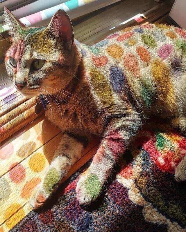 Chú mèo dể thương với đầy đủ màu sắc
