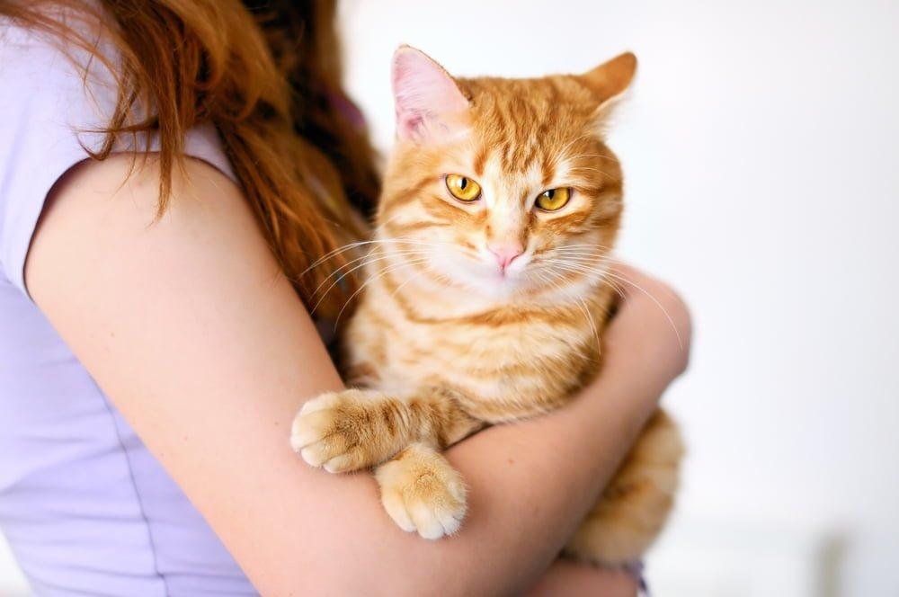 Khi phát hiện mèo gặp vấn đề về da nên đưa mèo đến gặp bác sĩ thú y ngay lập tức để chữa trị kịp thời