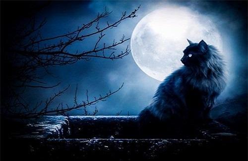 Mắt mèo - truyền thuyết ly kỳ