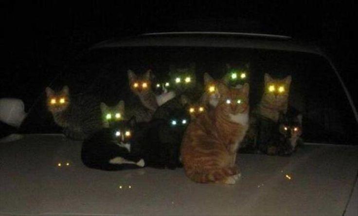 Mắt mèo sáng trong đêm