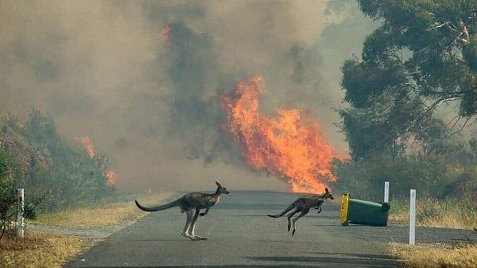 Các loài động vật tìm cách thoát khỏi đám cháy, chúng rời đi mà không có nguồn thực phẩm.