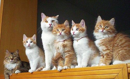 Những lưu ý sau khi mèo sinh