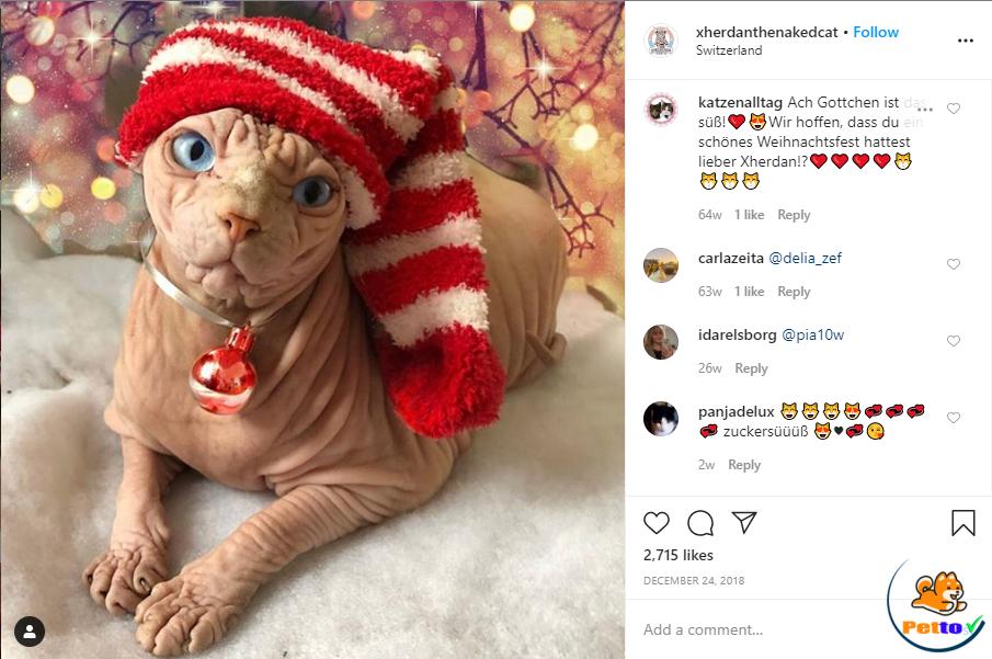 Một post của mèo Xherdan trên tài khoản Instagram