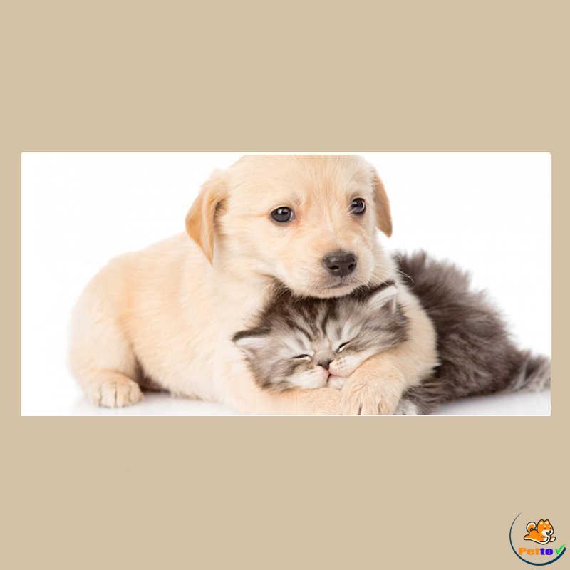 Nàng chó ôm bé mèo thật thân thiết và đáng yêu
