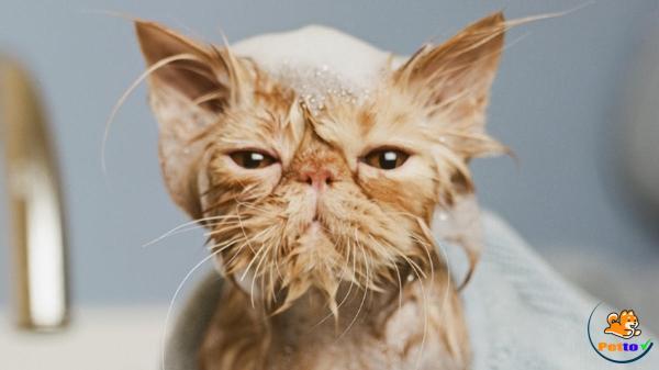Nàng chó tắm cho bé mèo vô cùng dễ thương.