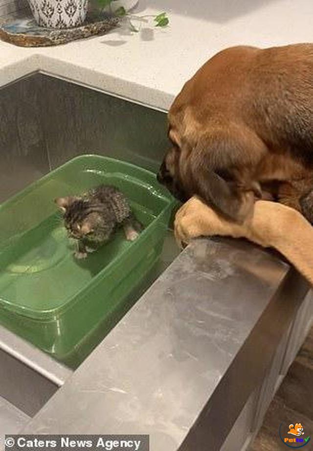 Hình ảnh nàng chó đang nhìn bé mèo thật âu yếm